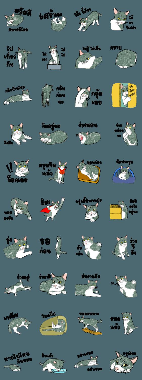 สติ๊กเกอร์ไลน์ ซ่าส์แมวไทย