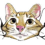 สติ๊กเกอร์ไลน์ little cat mayn version sticker