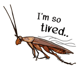 Amazing Cockroach (Eng) sticker #14625948