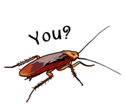 Amazing Cockroach (Eng) sticker #14625956