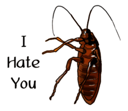 Amazing Cockroach (Eng) sticker #14625958