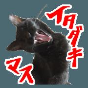 สติ๊กเกอร์ไลน์ KURONEKO Twin