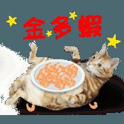 สติ๊กเกอร์ไลน์ Cats TNR