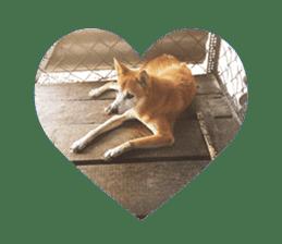 Cute Shiba Inu DOG 2 sticker #14689614