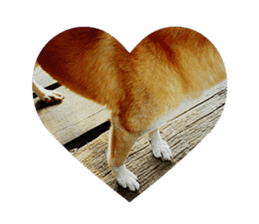 Cute Shiba Inu DOG 2 sticker #14689615