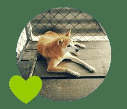 Cute Shiba Inu DOG 2 sticker #14689619