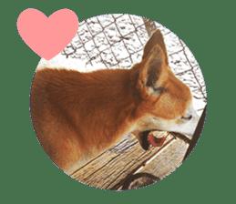Cute Shiba Inu DOG 2 sticker #14689620