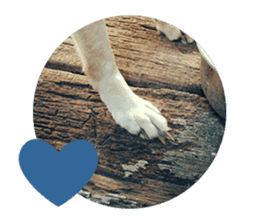 Cute Shiba Inu DOG 2 sticker #14689625