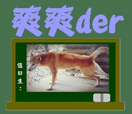 Cute Shiba Inu DOG 2 sticker #14689629
