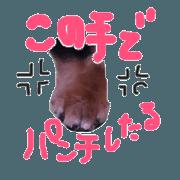 สติ๊กเกอร์ไลน์ Koro Koharu of the dachshund