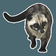 สติ๊กเกอร์ไลน์ Mumu the Cute Toddy Cat