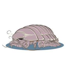 Giant isopod Stickers sticker #14729687
