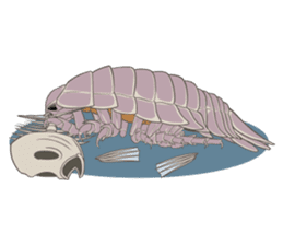 Giant isopod Stickers sticker #14729693