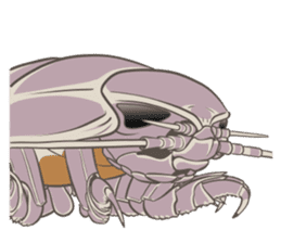 Giant isopod Stickers sticker #14729703