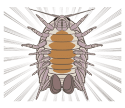 Giant isopod Stickers sticker #14729706