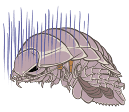 Giant isopod Stickers sticker #14729713