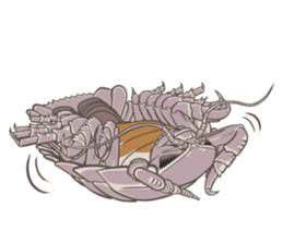 Giant isopod Stickers sticker #14729714