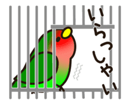 Lovebird [Ver7](move/start and close) sticker #14731819