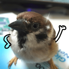 happy sparrow-doudou