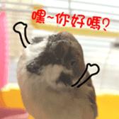 happy sparrow-doudou sticker #14758007