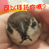 happy sparrow-doudou sticker #14758009