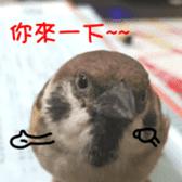 happy sparrow-doudou sticker #14758011