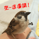 happy sparrow-doudou sticker #14758012