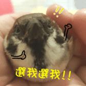 happy sparrow-doudou sticker #14758013