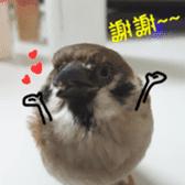 happy sparrow-doudou sticker #14758015