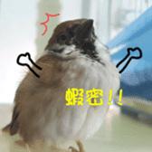 happy sparrow-doudou sticker #14758021