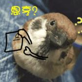 happy sparrow-doudou sticker #14758022