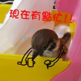 happy sparrow-doudou sticker #14758024