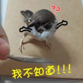 happy sparrow-doudou sticker #14758025