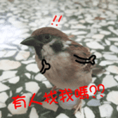 happy sparrow-doudou sticker #14758026