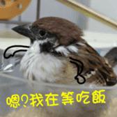 happy sparrow-doudou sticker #14758027