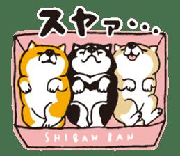 SHIBANBAN sticker #14887034