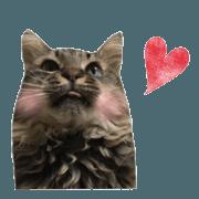 สติ๊กเกอร์ไลน์ cat of cure Facial expressions
