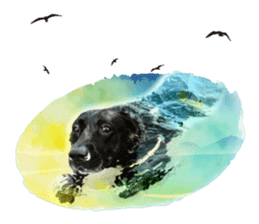 P. Black Labrador sticker #14945693