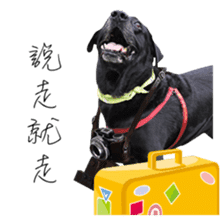 P. Black Labrador sticker #14945695