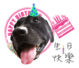 P. Black Labrador sticker #14945698