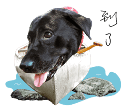P. Black Labrador sticker #14945705