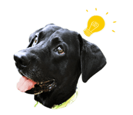P. Black Labrador sticker #14945706