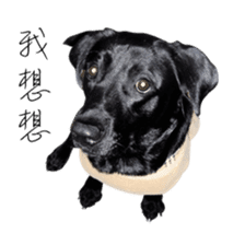 P. Black Labrador sticker #14945708