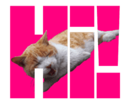 Cats In Alphabet(animation photo) sticker #14950488