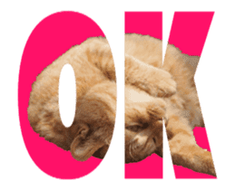 Cats In Alphabet(animation photo) sticker #14950494