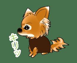 Pupu of Chihuahuas sticker #14974041
