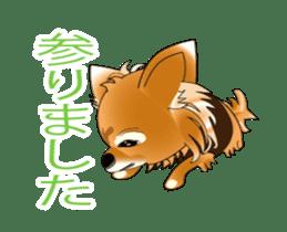 Pupu of Chihuahuas sticker #14974042