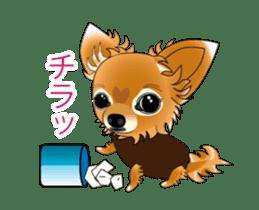Pupu of Chihuahuas sticker #14974044