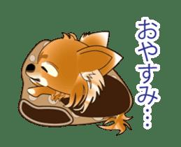 Pupu of Chihuahuas sticker #14974046