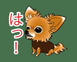 Pupu of Chihuahuas sticker #14974047